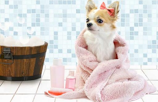 O banho e a tosa são necessários ao longo do ano todo, durante o inverno os cuidados são diferentes, mas não devem ser suspensos.