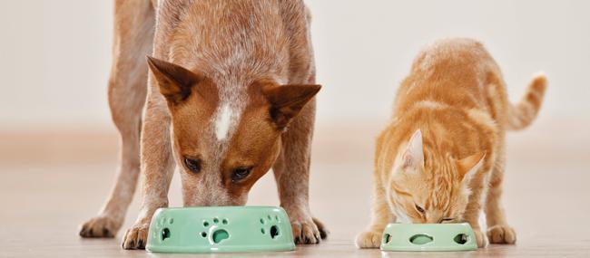 A alimentação dos pets mesmo durante o inverno não deve ser alterada, já que apesar de sentirem mais fome, se exercitam menos do que em outras épocas do ano.