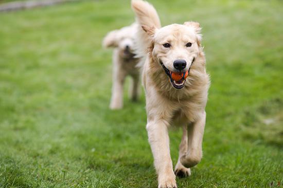 Cães Hiperativos são mais comuns do que se pensa, tente essas 5 dicas que separamos para te ajudar a acalmar o seu peludo cheio de energia!