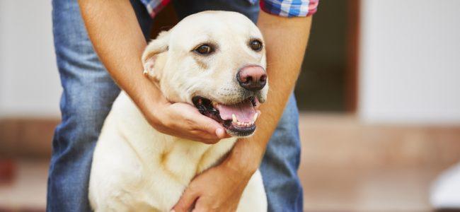 Algumas raças precisam gastar mais energia do que outras, leia sobre a raça do seu cão e entenda melhor as necessidades dele!