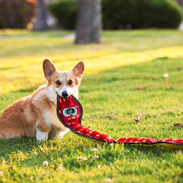 Brinquedos com apito são adorados pela maioria dos cães e viemos te contar o porque disso!