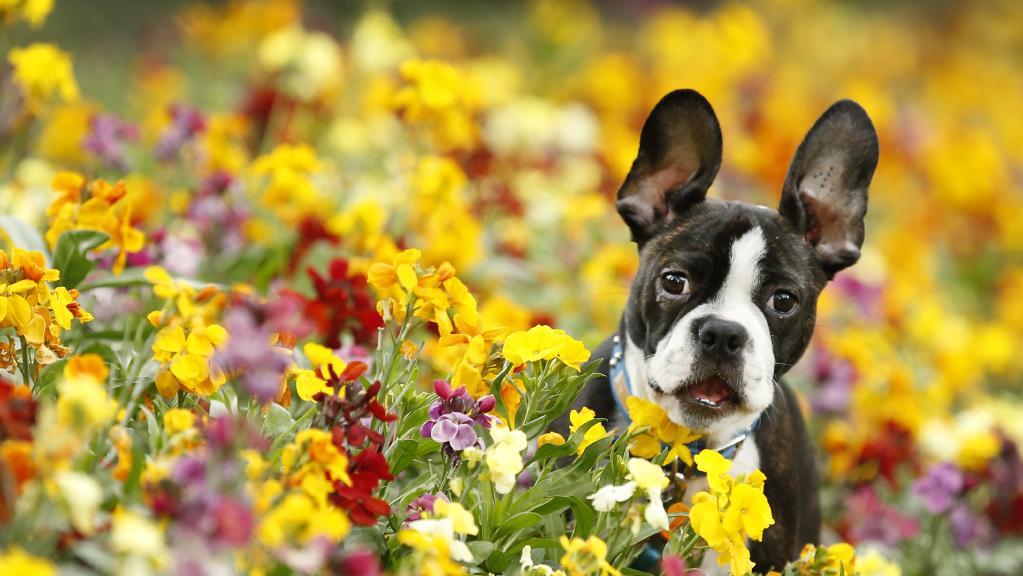 Alergias também afetam os Cães, saiba quais são as mais comuns e os principais sintomas.