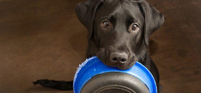 Será que é fome mesmo? Vem entender melhor sobre a insaciável vontade de comer dos cães!