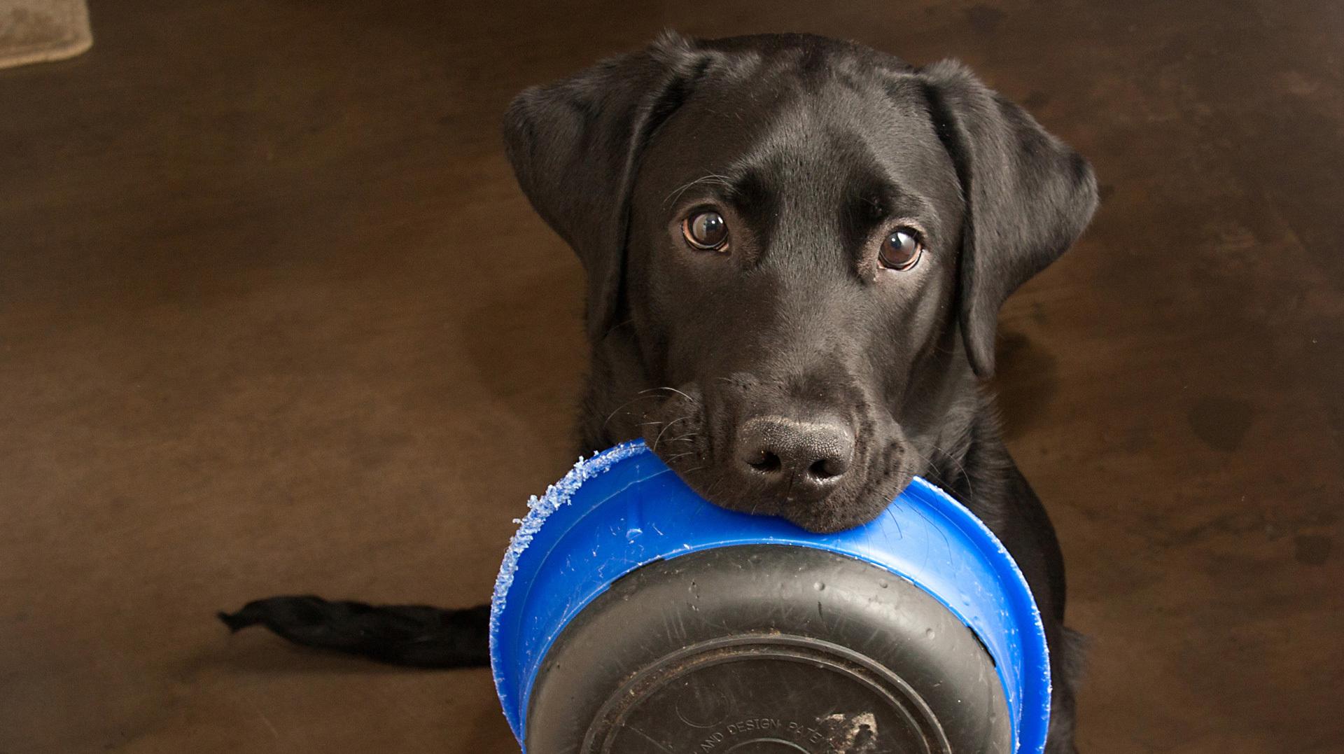 Fome ou Gula? Seu cachorro vive com fome?