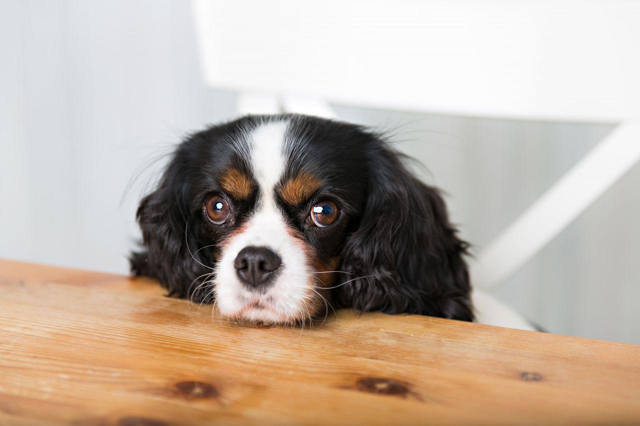 Se ele estiver mesmo com fome, vale consultar o veterinário sobre a marca da ração e a quantidade oferecida.