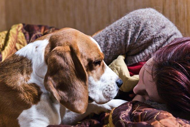 Telepatia, conforto e uma amizade infinita! Cães são mesmo incíveis!
