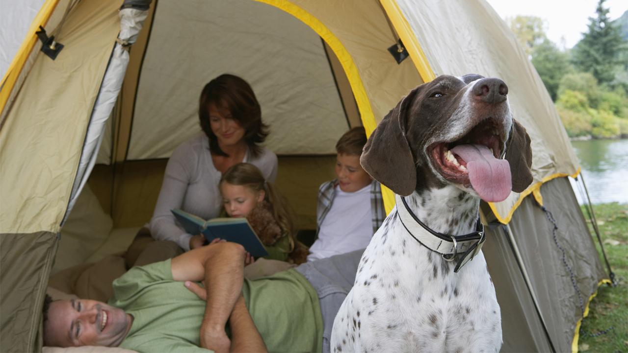 Viagem de férias em família é uma delícia, se for com os pets junto então, melhor ainda, mas alguns cuidados precisam ser tomados com antecedência!