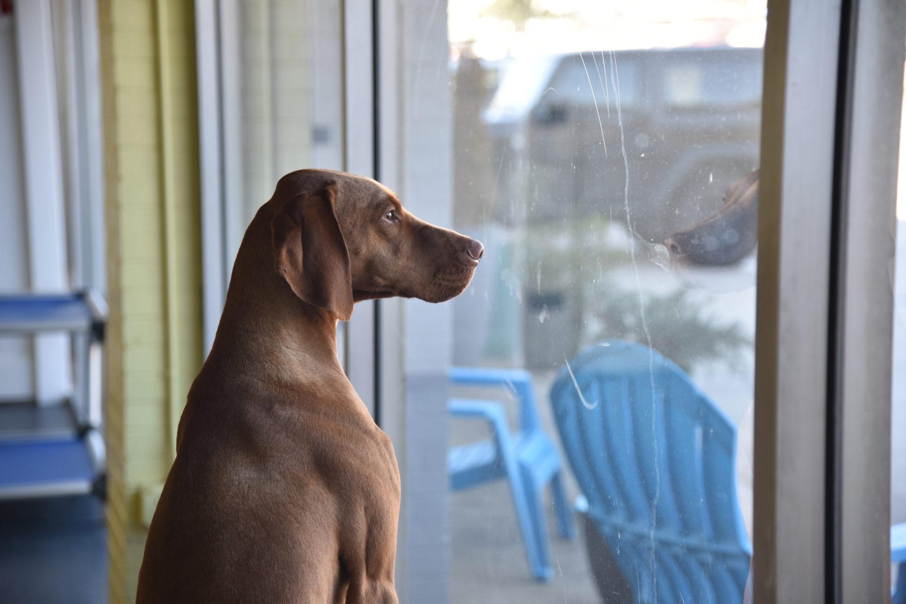 Caso opte por não levar o pet na viagem, escolha um bom hotel para cães ou garanta que alguem de confiança cuide dele em casa na sua ausência.