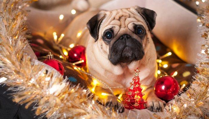As decorações de Natal atraem os peludos e podem causar acidentes!