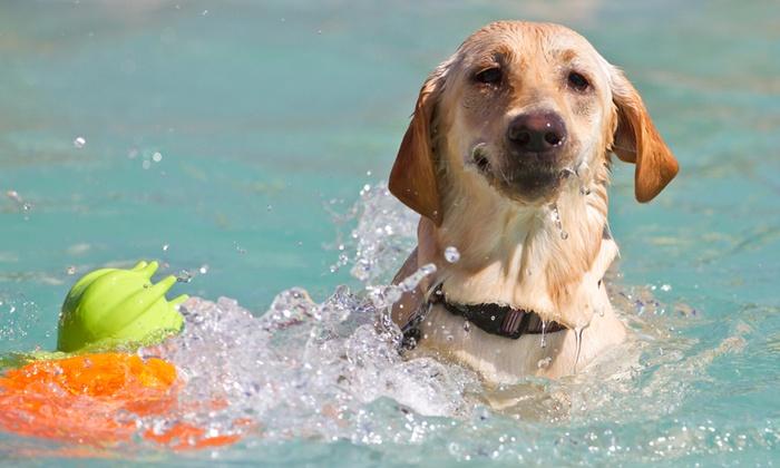 Alguns cães tem maior afinidade com a água e se sentem confortáveis logo no primeiro contato!