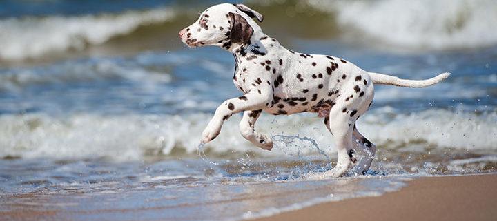 O primeiro contato com a água deve ser feito lentamente e pode ser incentivado por brincadeiras de buscar, em águas rasas.