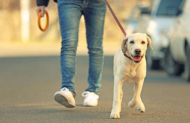 Caminhadas tem um papel importante na rotina dos cães, por isso você precisa se manter motivado e não deixar faltar esse passeio diário!