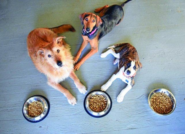 A quantidade de alimento oferecido deve ser indicada por um médico veterinário de confiança e deve ser pesada/medida.