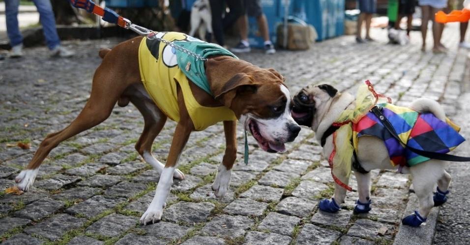 Nem todos os cães são socializados e se dão bem com outros cães. Observe antes de qualquer aproximação!
