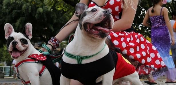 Carnaval com os Pets! Curta a folia com segurança!