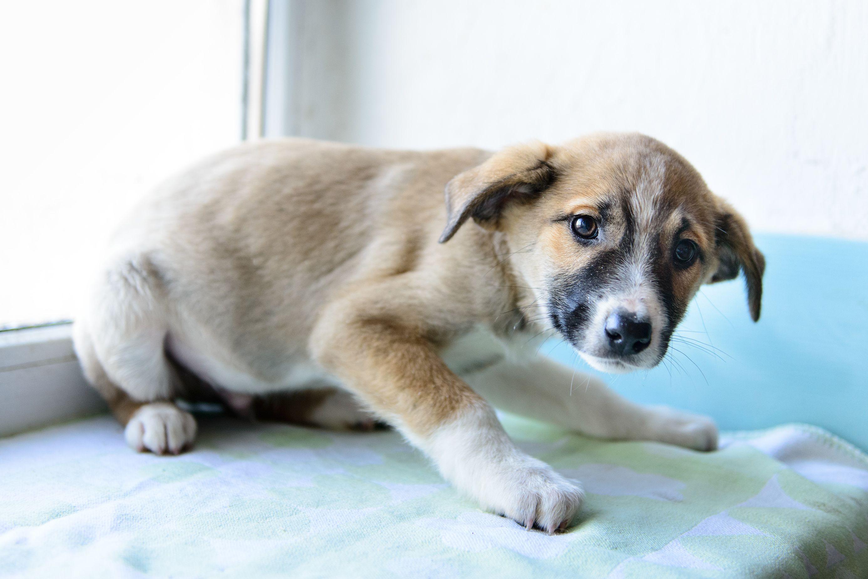 Medo é um sentimento comum entre os cães, mas é importante identificar as causas para ajudar o seu pet a enfrentar o problema!