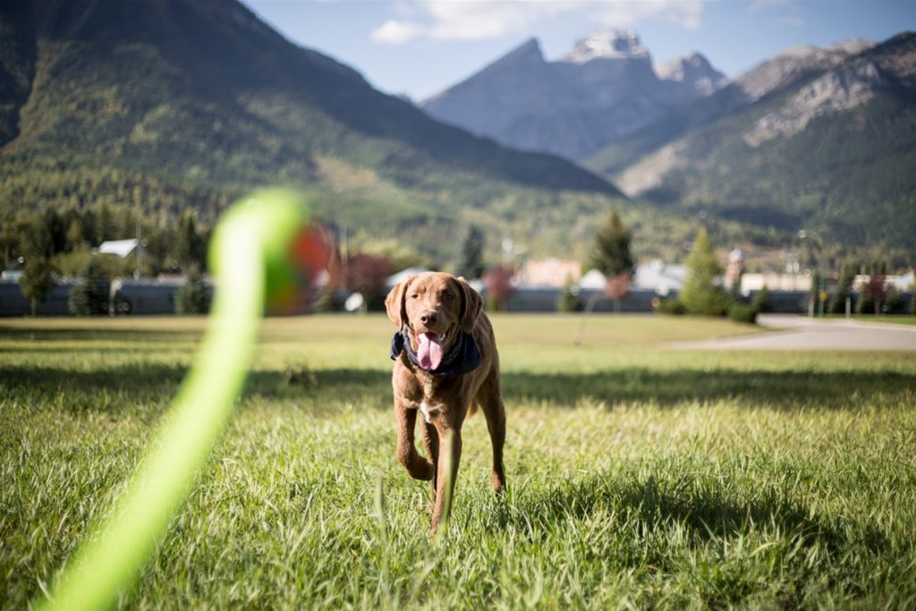 Estar ao ar livre é uma ótima oportunidade para brincadeiras de buscar com mais espaço, considere ficar longe dos outros cães para não causar ciúmes.