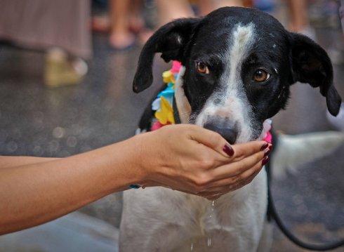 Mantenha o Cão hidratado no Carnaval! Pra curtir a folia, leve sempre agua fresca para o seu pet!