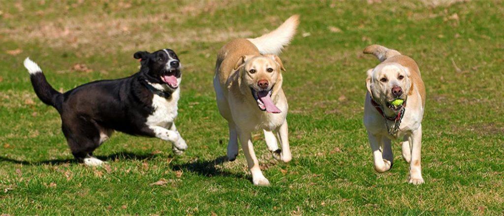 No parque fique sempre de olho no seu cão! Observe a linguagem corporal dele e dos outros cães que estão por perto!
