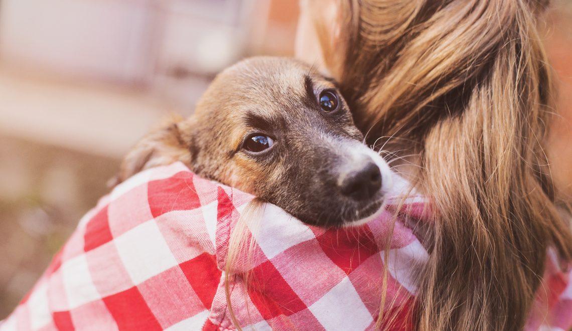 Proprietário de um Cão pela primeira vez? Vem saber tudo que você precisa nesse comecinho!