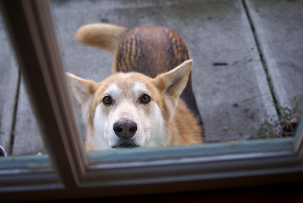 Seu cãozinho é submisso? É fácil detectar e com paciência é possivel reverter esse problema.