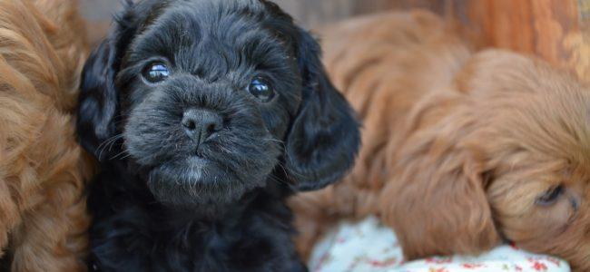 Escolher o Nome do seu Cão é uma decisão importante, mas que exige alguns cuidados para evitar confusão!