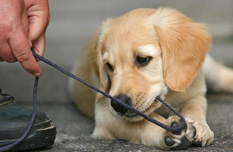 Ansiedade da sepação é muito discutida entre especialistas e donos de cães, eles já detectam quando o dono se arruma pra sair e tentam evitar a separação.