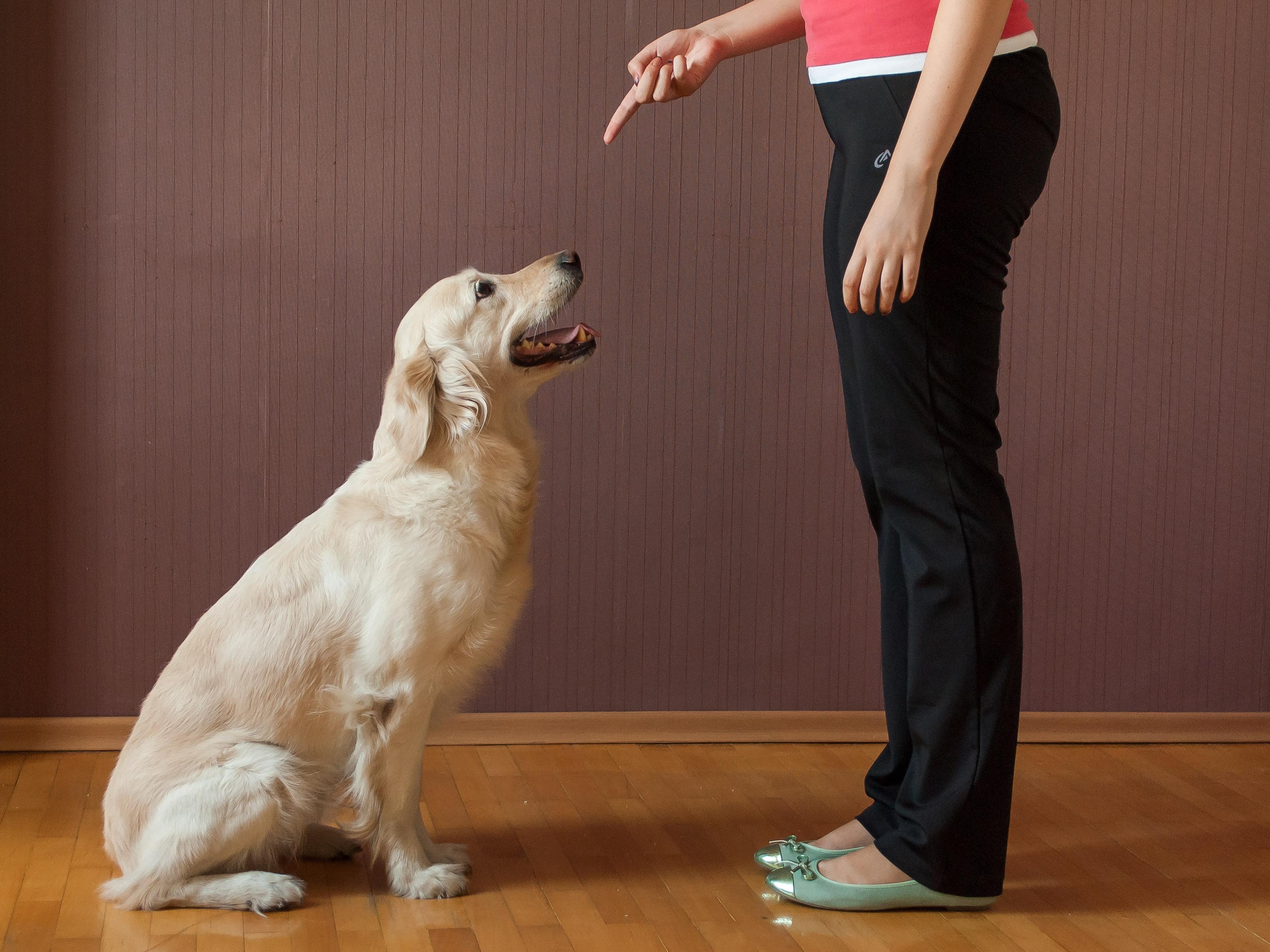 Adestramento adequado pode resolver quase todos os problemas de comportamento do seu cão. Com consistencia e reforço positivo, em pouco tempo os resultados podem ser notados.