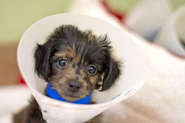 Castração é uma forma eficaz de prevenir problemas de saúde e também ajuda no controle de cães abandonados.