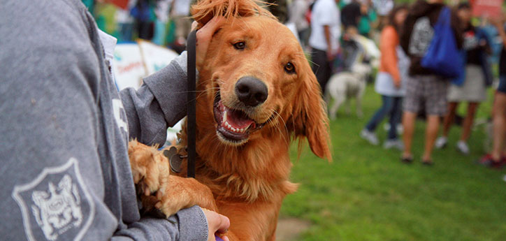 Problemas de comportamento acontecem com a maioria dos cães, listamos os principais deles e como você deve agir para corrigir esse problema!
