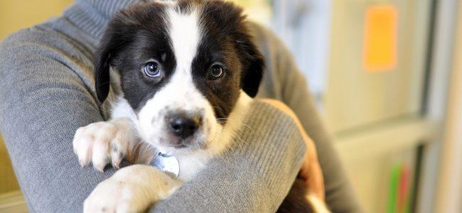 Castração precoce é ainda mais eficaz na prevenção de doenças do sistema reprodutos dos pets.