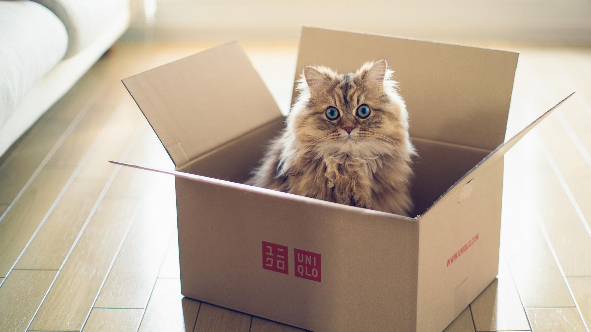 Gatos e caixar de papelão são um caso antigo, você compra a melhor cama, os melhores brinquedos e as embalagens deles vão sempre chamar mais atenção do seu bichano. Rs