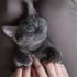 Gatos são pets cheios de personalidade e muito amor pra dar! Listamos 11 fatos sobre eles para você se identificar!