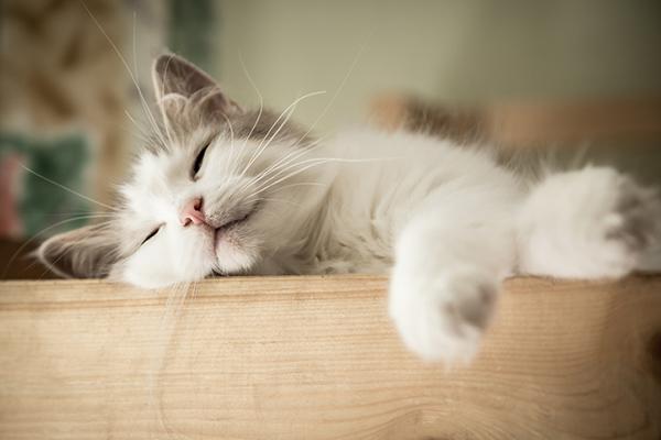 Eles dormem muito mesmo, mas, existe um período, mais precisamente de 1 a 3 horas antes do seu despertador que eles estão cheios de energia e amor pra dar. Rs.