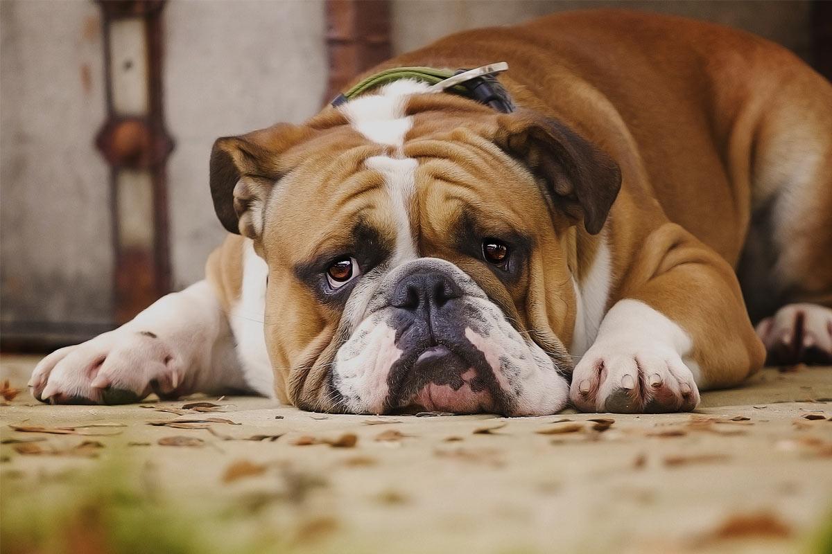 Você, as outras pessoas que moram com você e seus outros pets precisam viver o luto para superá-lo.