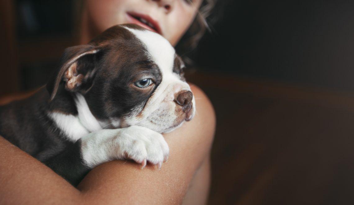 Quando é a hora certa para ter um novo cão após uma perda? Muitas coisas devem ser consideradas antes da decisão.
