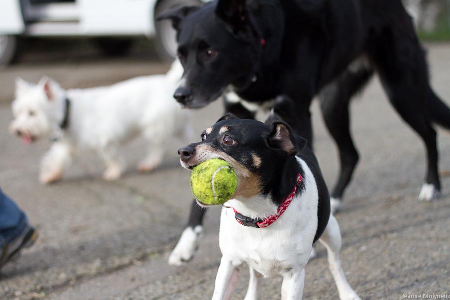 Convide seus amigos com seus respectivos pets para uma visita, a interação entre os pets é muito válida!