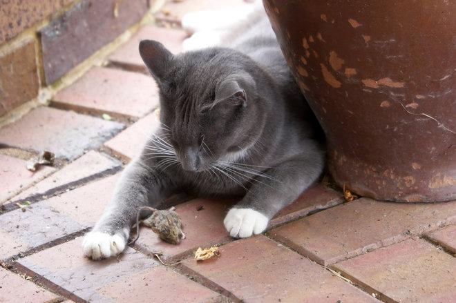 Se o instinto caçador do seu gatinho te incomoda, você tem que direcionar esse estímulo com brinquedos