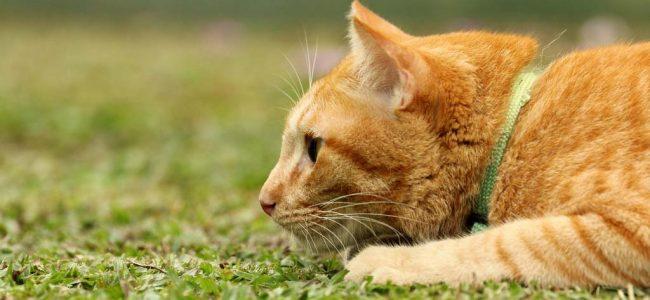 Gatos são caçadores natos e pode acontecer de ele aparecer com animais mortos de presente pra você|