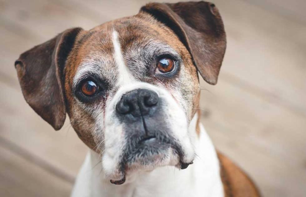 Envelhecimento dos Pets : Mitos e Fatos