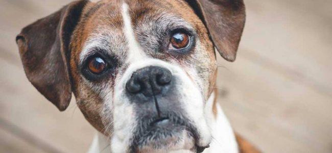 Envelhecimento em Cães e Gatos e tudo que precisa saber sobre o assunto