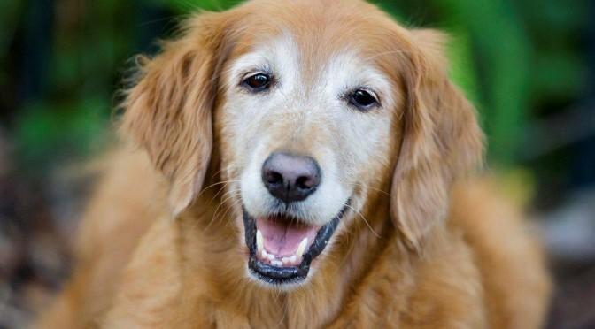 Com os cuidados certos, você pode ajudar a prolongar a vida saudável do seu animal!