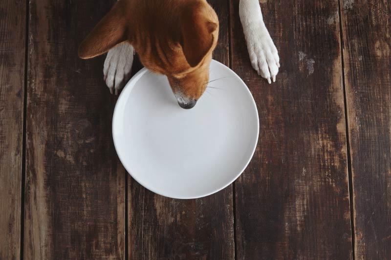 Meu pet ingeriu algo que não devia, e agora? Porque será que pets comem tudo que veem pela frente? Saiba como lidar numa situação dessa.