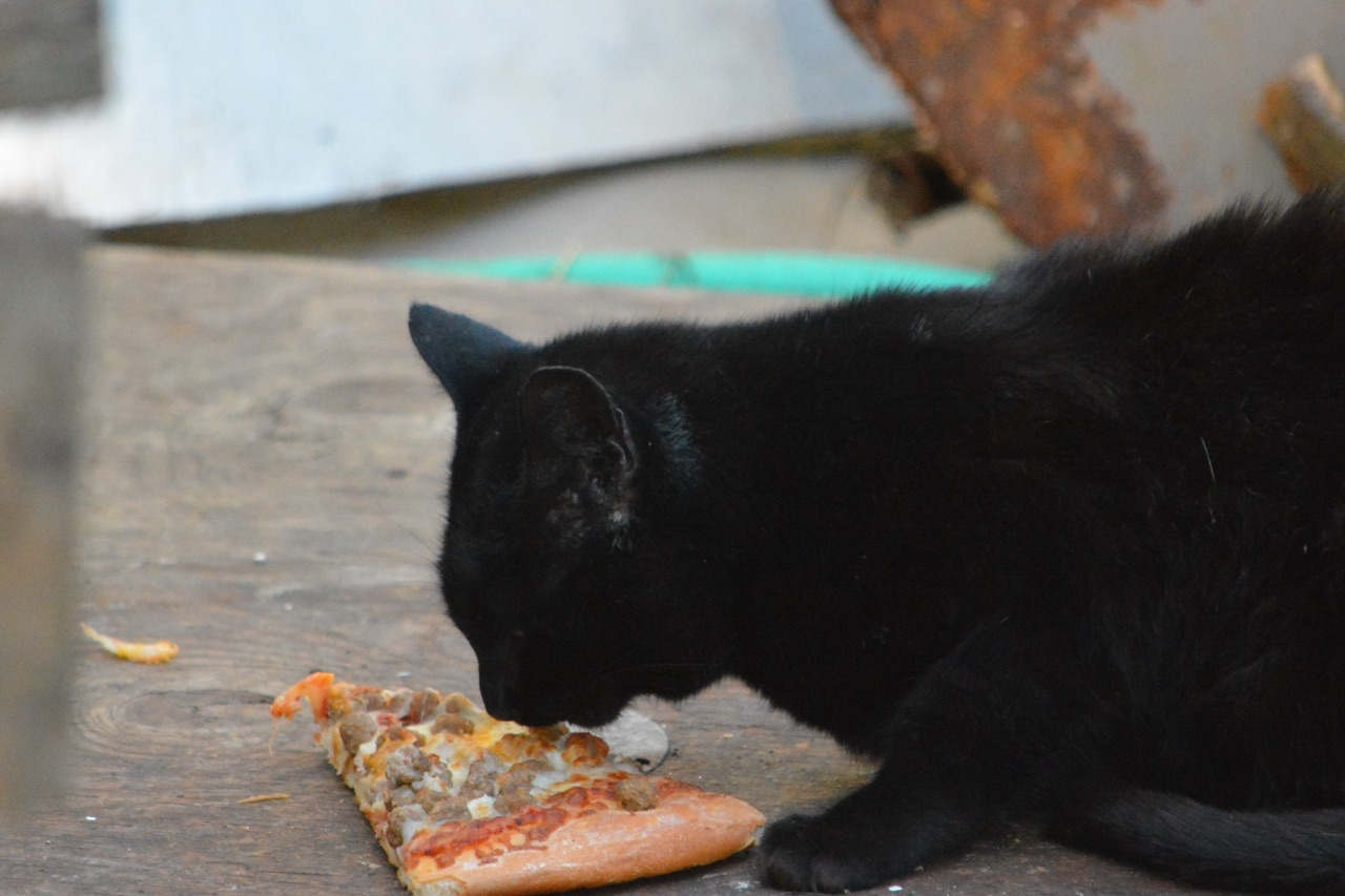 Um resto de comida apodrecido pode causar problemas para o seu pet. Sempre observe o comportamento e a qualquer sinal de anormalidade, procure o seu Veterinário de confiança!