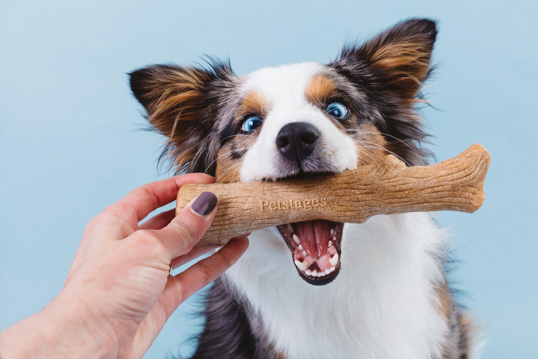 É importante escolher o brinquedo de acordo com o porte, poder de destruição e levar em consideração também o tipo preferido do cão.