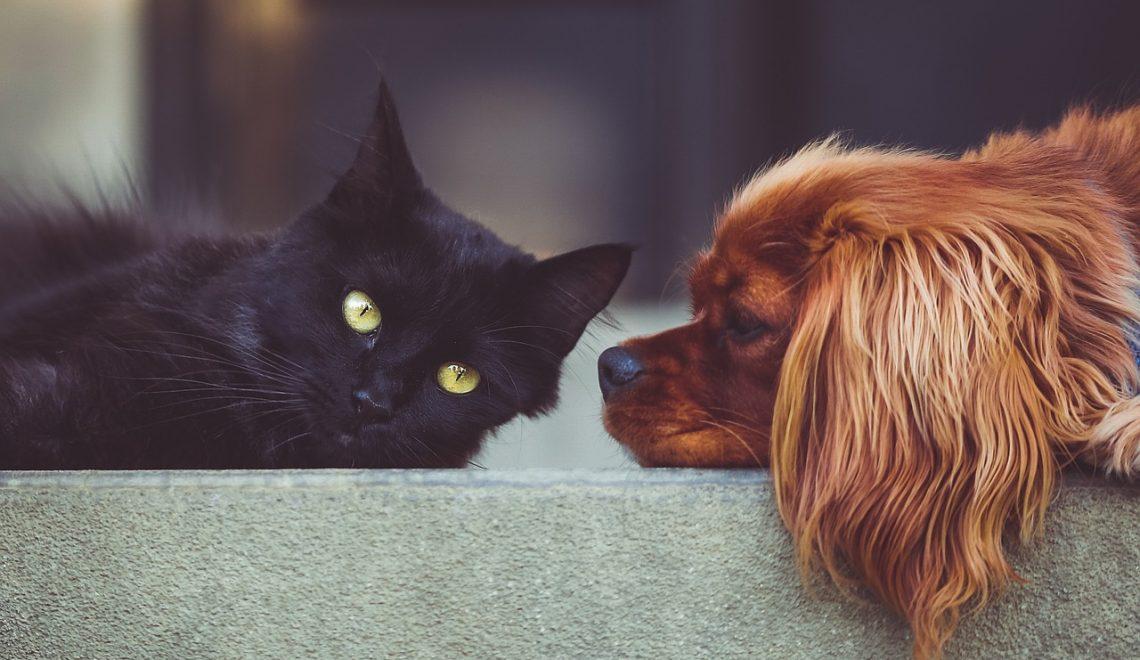 Cães e gatos podem sim conviver em harmonia, mas é importante saber como apresentar um ao outro