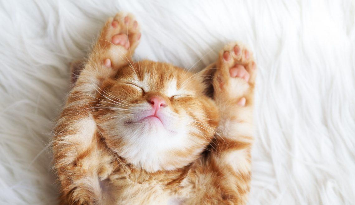 Donos de gatos precisam saber os gostos dos seus bichanos para ajudar a mantê-los felizes, saudáveis e ativos!