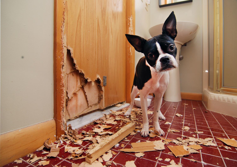 Cuidado, ao punir seu cão você pode agravar ainda mais o mau comportamento