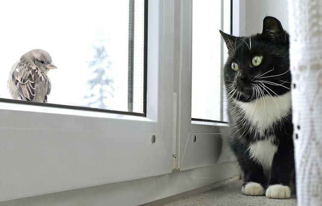Eles adoram passar um tempo na janela observando os pássaros.