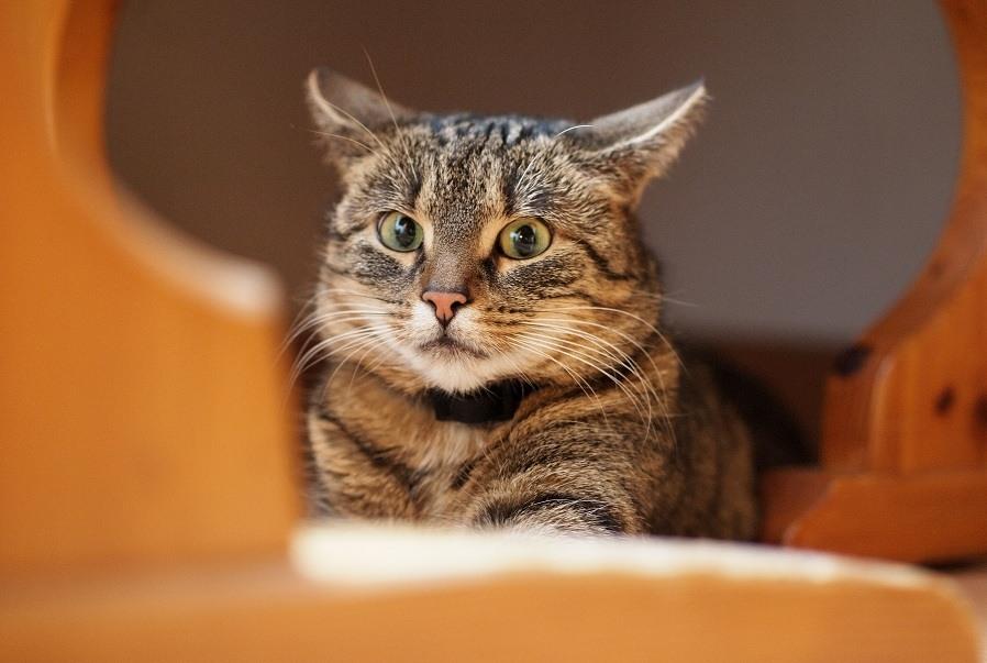 Mudança de casa deve ser feita com cuidado, sempre mantendo os pertences do gato com ele para dar sensação de casa onde ele estiver.